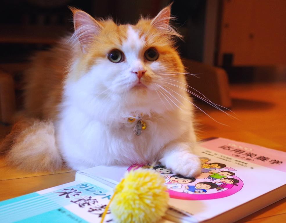 ネコの栄養についてもっと勉強しなさい。