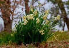 もーすぐ春やね#2 @佐布里台