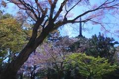 桜散り初める太古の森#1 @ 興福寺