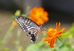 花と蝶#2