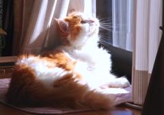 冬日に輝くひなたぼっこ猫君