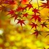 秋の終わりに#2 @丈山苑