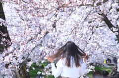 桜満開#2 @岡崎城公園