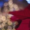 クリスマス イブイブ#1 @デンパーク