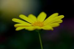 冬に咲く花 @我家のガーデニング