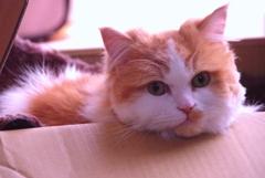箱入り猫君