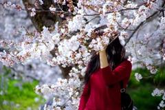 桜満開#3 @岡崎城公園