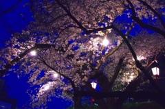 夜桜 @岡崎城公園