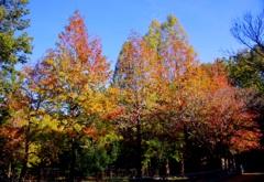 秋晴れ#1 @東山動植物園