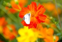 花と蝶#3