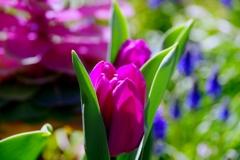 春が来た! 万歳!