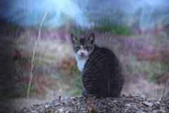 メンチを切る猫 #1