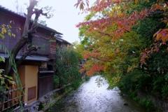 京の秋風情 @祇園