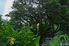 慈愛の守木