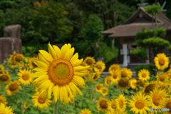 向日葵神社