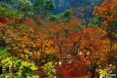 曾木の彩り