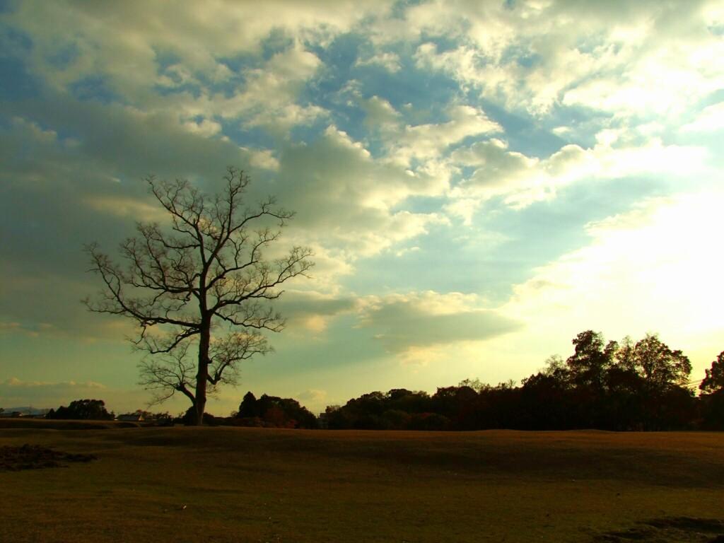 奈良公園/飛火野園地