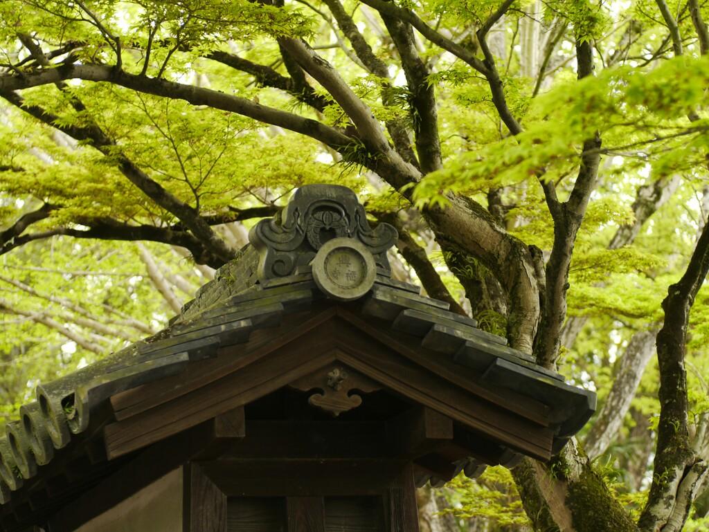 青紅葉/興福寺