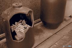 flowers in the broken pottery