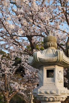 桜と神社。