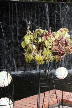 植物と滝。