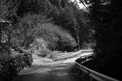 日本の日常 道
