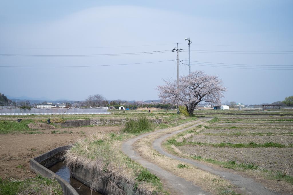 日本の日常