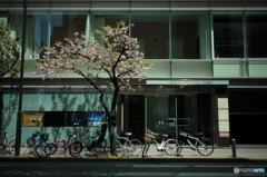 東京スナップ_15