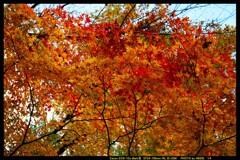 秋の六合村赤岩集落にて㉒