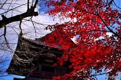 群馬赤城福増寺の秋⑨
