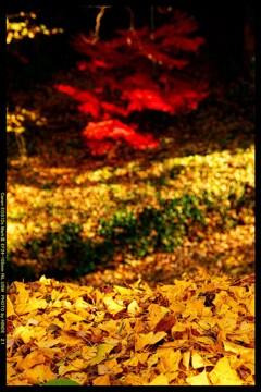 秋の少林山達磨寺にて⑳