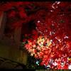 秋の少林山達磨寺にて④