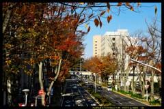 前橋駅前を散策と紅葉と⑬
