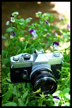 ひんでコレクション Canon FTb①