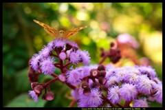 ぐんま昆虫の森にて⑭