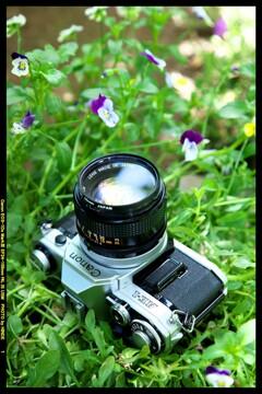 ひんでコレクション Canon AE-1 ③