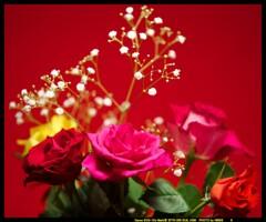 希望と愛とバラと①