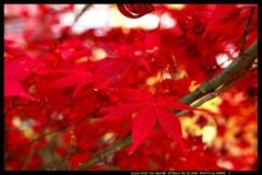 秋の榛名神社にて⑥