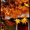 秋の榛名神社にて⑪