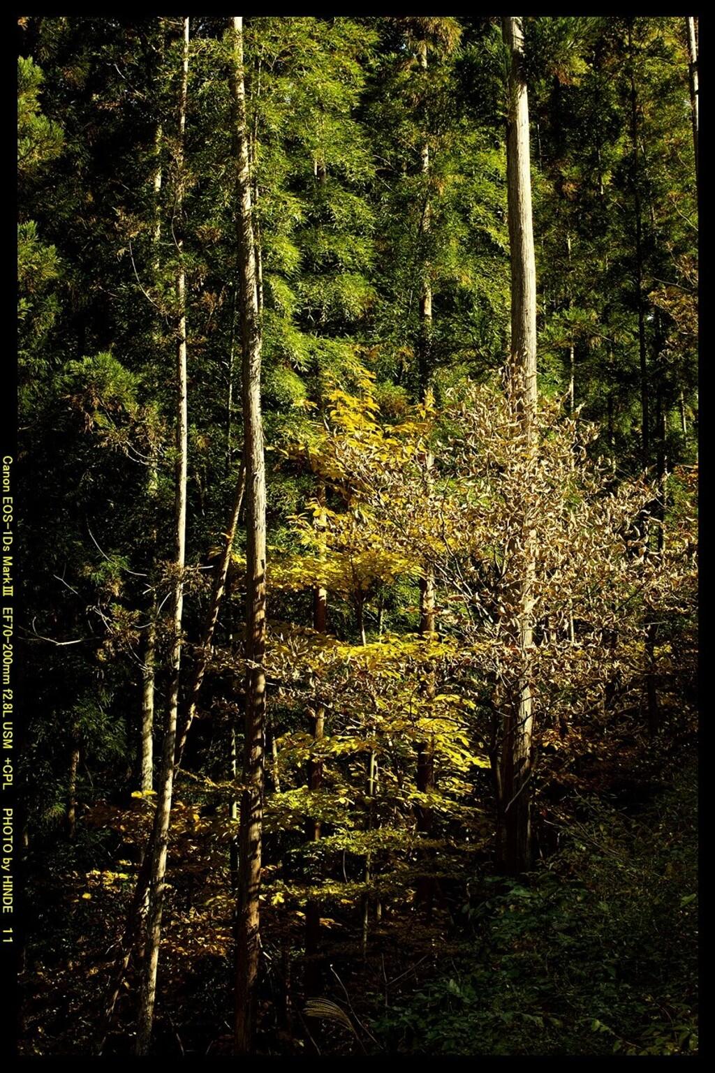 秋の吾妻渓谷にて⑤