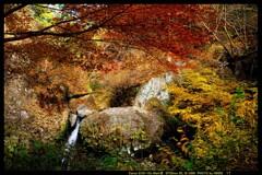 秋の榛名神社にて⑮