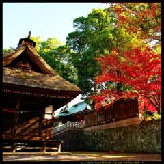 秋の少林山達磨寺にて⑭