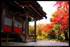 秋の少林山達磨寺にて⑬