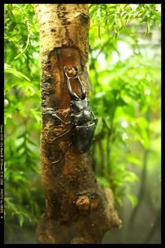 ぐんま昆虫の森にて④