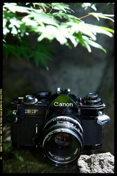 ひんでコレクション Canon EF ②