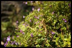 ぐんま昆虫の森にて⑧