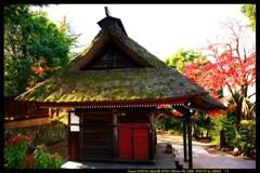 秋の少林山達磨寺にて⑫