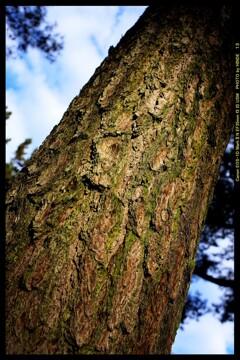 前橋の敷島公園松林にて⑥