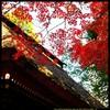 秋の少林山達磨寺にて⑮