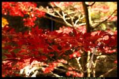 秋の榛名神社にて⑬